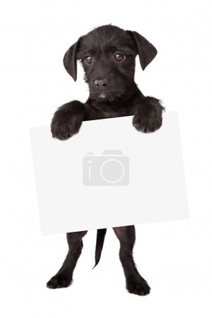Black Puppy Holding Sign