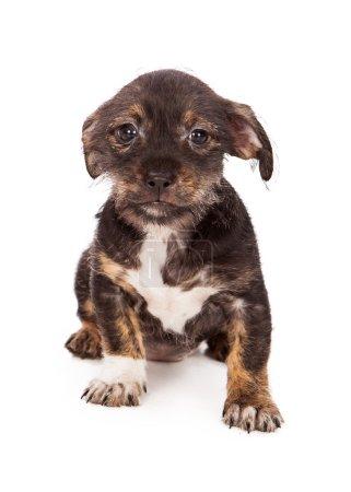 Shy Little Puppy