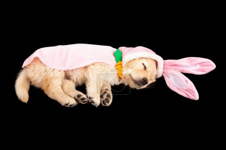 Easter Bunny Puppy Sleeping