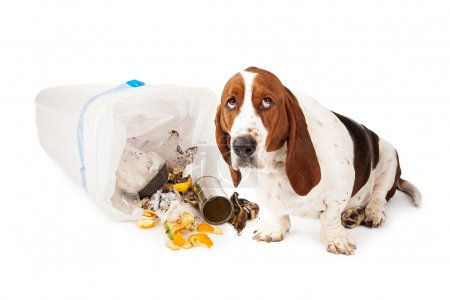 Bad Dog Getting Into Garbage