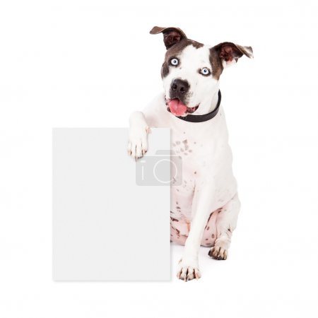 Pit Bull Holding Blank Sign