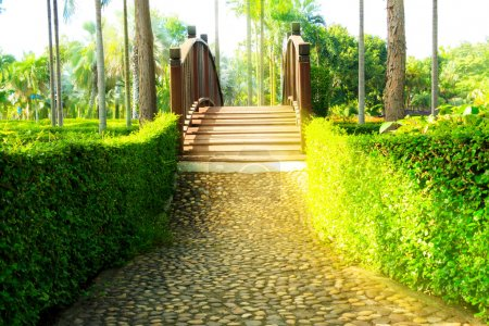 Wood bridge and Pathway in garden design with sun ray
