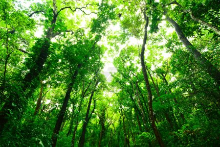 Green forest in the morning