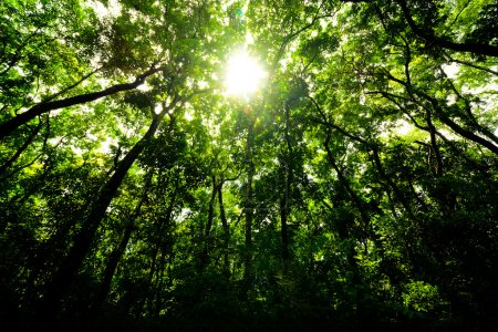 Photo pour Verte forêt le matin - image libre de droit