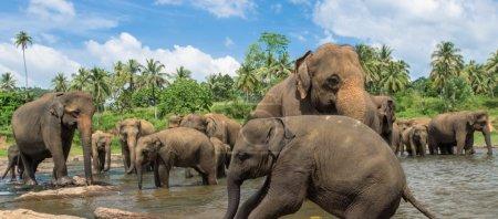 Elephants in the beautiful river landscape