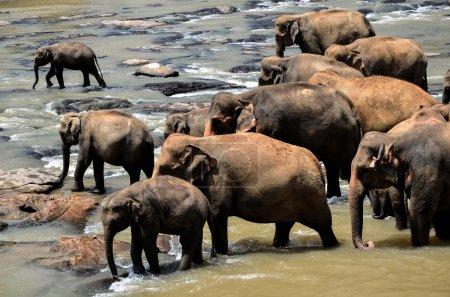 Elephant group on the lake
