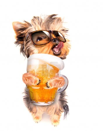 Photo for Drunk dog with fresh glass of beer - Royalty Free Image