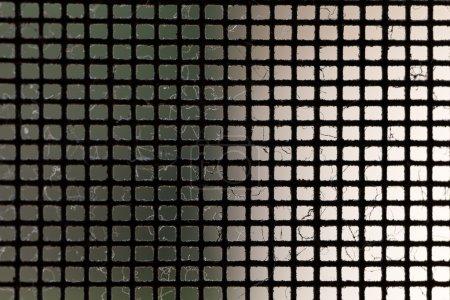 Mosquito Net Macro