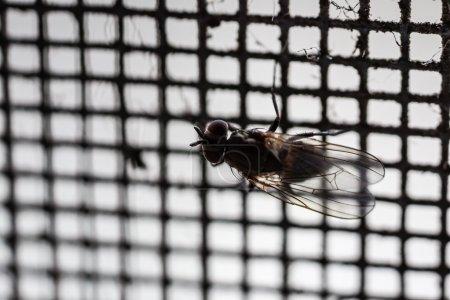 Fly net macro