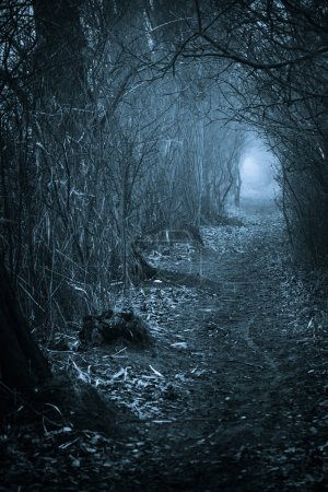 Photo for Dark spooky passage through the forest, toned blue - Royalty Free Image