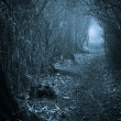 Dark spooky passage through the forest, toned blue...