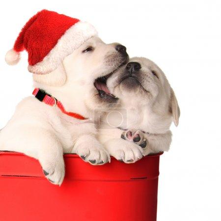 Playfull puppies
