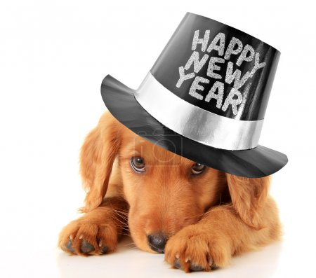 Photo for Shy puppy wearing a Happy New Year top hat. - Royalty Free Image