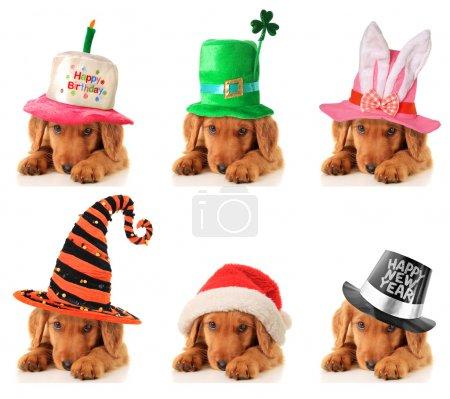 Photo pour Un chiot pour chaque occasion. Anniversaire, Saint Patrick, Pâques, Halloween, Noël et Nouvel An . - image libre de droit