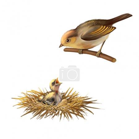 Little bird, bird nest and Baby bird of Sand Martin swallow