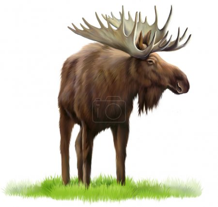 moose on a grass