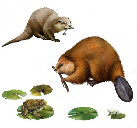 Beaver eating stick, pretty otter with a fish in its mouse, frog on lilly leaves, toad