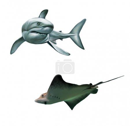 Shark and fish stingray
