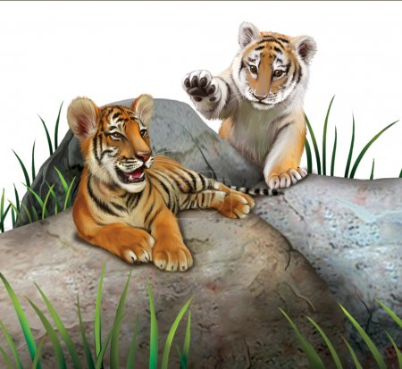 Photo for Two baby tigers playing on the rocks. Isolated Illustration on white background. - Royalty Free Image