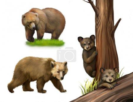 Little teddy-bear bears playing. Fallen tree,Walking adult bear