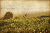 Vintage nature background, Sunny field, a forest. Flowers on a meadow