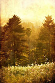 Vintage nature background, Sunny field, a forest. Flowers on a meadow.