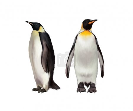 King Penguin, Gentoo and emperor penguin
