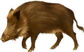 Satnding Boar