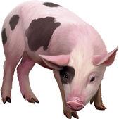 Little spotted piglet