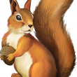 Squirrel. Isolated realistic illustration on white...