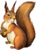 Squirrel Isolated realistic illustration on white background