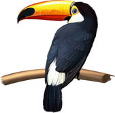 Illustration of toucan on branch