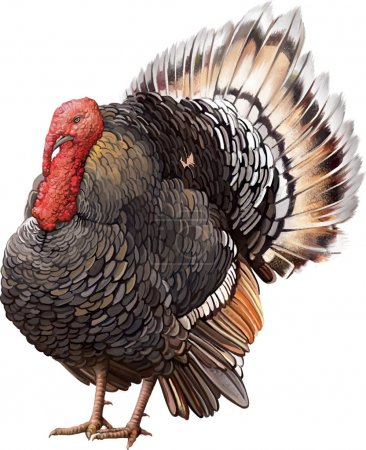 Illustration pour Homme Turquie debout avec grande queue . - image libre de droit