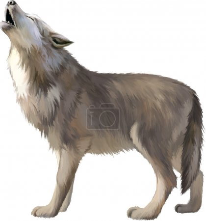 Illustration for Wolf Isolated. Vector Illustration - Royalty Free Image