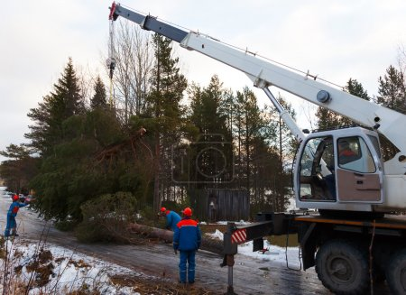 Rescue workers removed the tree felled by Hurricane