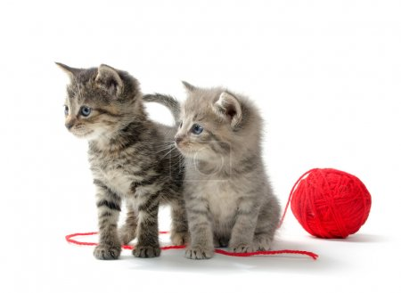 Two tabby kittens and yarn