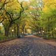 Image of The Mall area in Central Park, New York C...