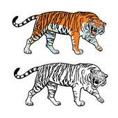Amur Siberian tiger