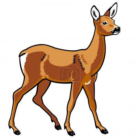 Illustration pour Chevreuil, capreolus capreolus, image vectorielle, animal debout, vue de côté isolé sur fond blanc - image libre de droit