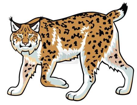 Illustration pour Lynx, image vectorielle, lynx, chat sauvage, vue latérale isolée sur fond blanc - image libre de droit