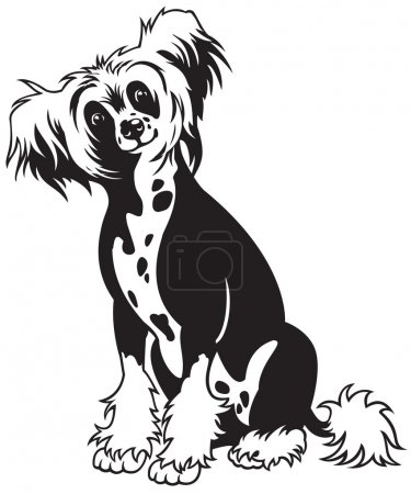 Chinese crested dog black white