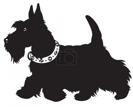 Illustration for Dog,scottish terrier breed,black and white vector picture isolated on white backgroud,side view image - Royalty Free Image