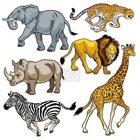 Illustration for Set with africa animals,beasts of savanna,pictures isolated on white background,vector illustration - Royalty Free Image