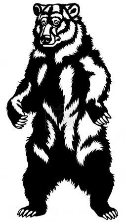 grizzly bear black white