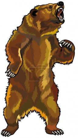 Illustration pour Grizzli, pose rugissante agressive, image vectorielle isolée sur fond blanc - image libre de droit