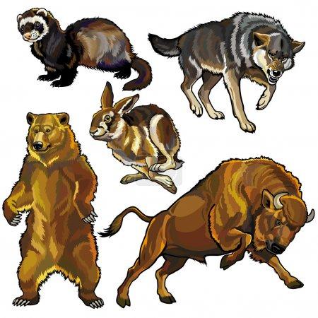 Illustration pour Ensemble avec des animaux, les bêtes sauvages de la forêt d'Europe, des photos isolées sur fond blanc - image libre de droit