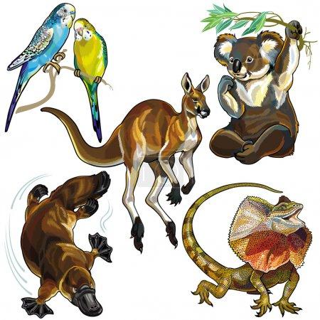 Set with wild animals of australia