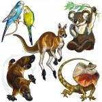 Set with wild animals of australia isolated on whi...