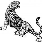 Tiger black and white illustration...