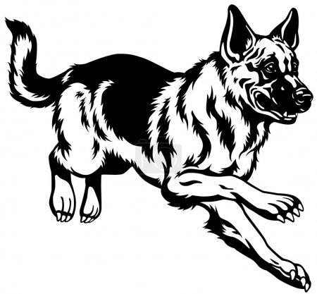 German shepherd black and white